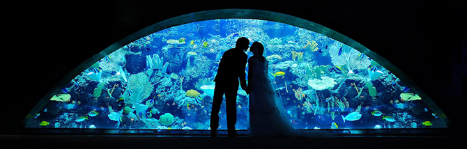Aquarium of the Pacific LGBT Wedding Reception Venue in Long Beach California