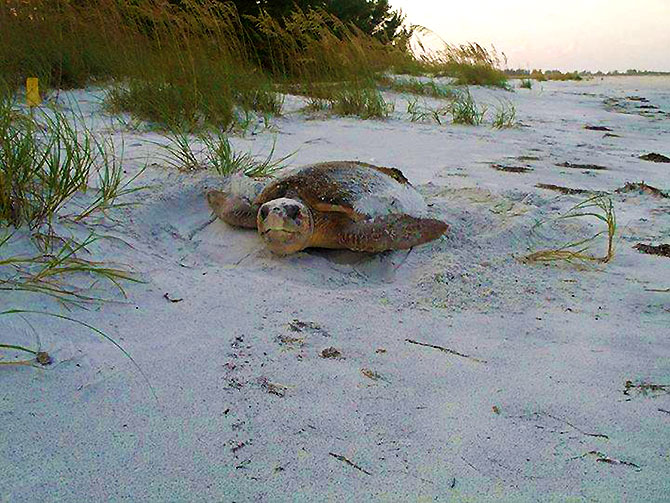 Sunset Beach House - Sea Turtle