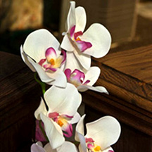Photographic Pages - Orchid