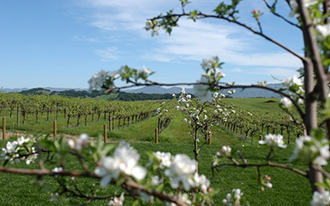 California Wine Country Wedding Packages Farm
