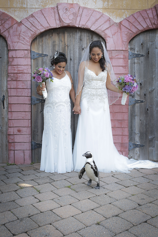 LGBT Weddings Penguin - Atlantis Banquets and Events - Long Island, New York LGBT Wedding Receptions