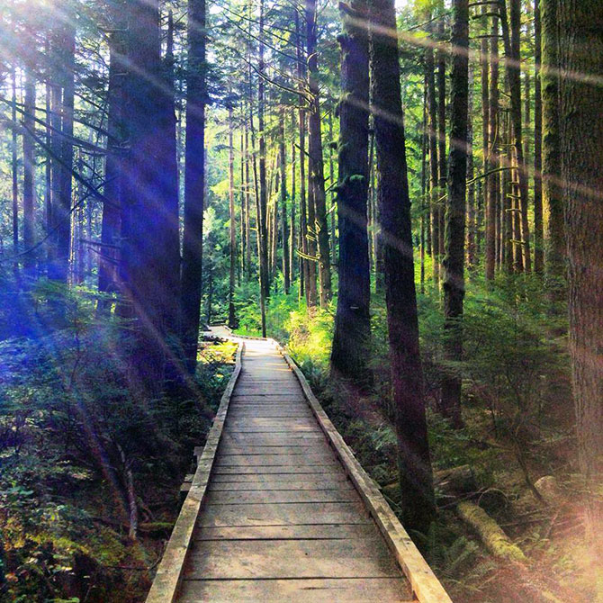 King County S Parks Recreation Wooden Boardwalk Through Forest